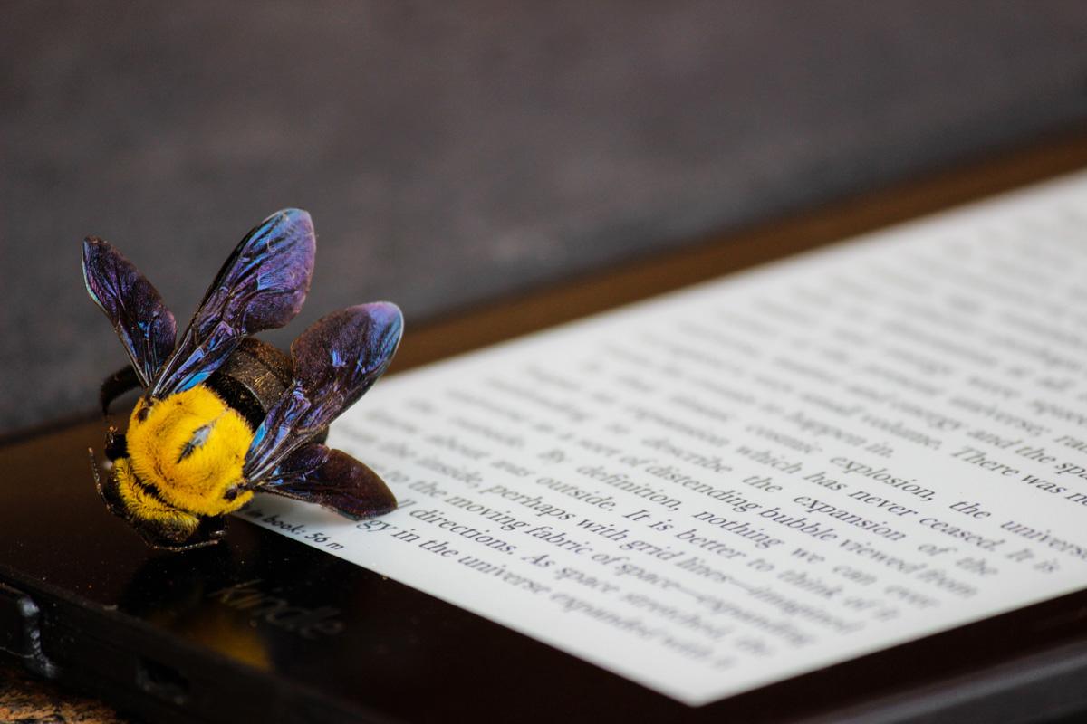 Kreativität muss sich lohnen - die Autorenwelt zeigt sich solidarisch mit Autoren