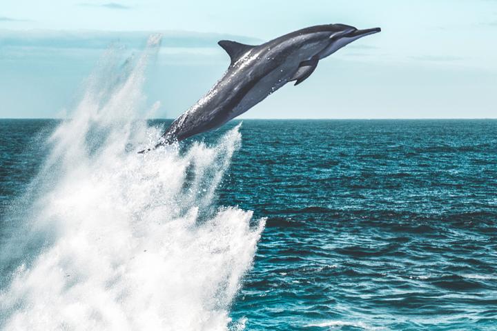 Wer kann das Springen des Delphins erkaufen?