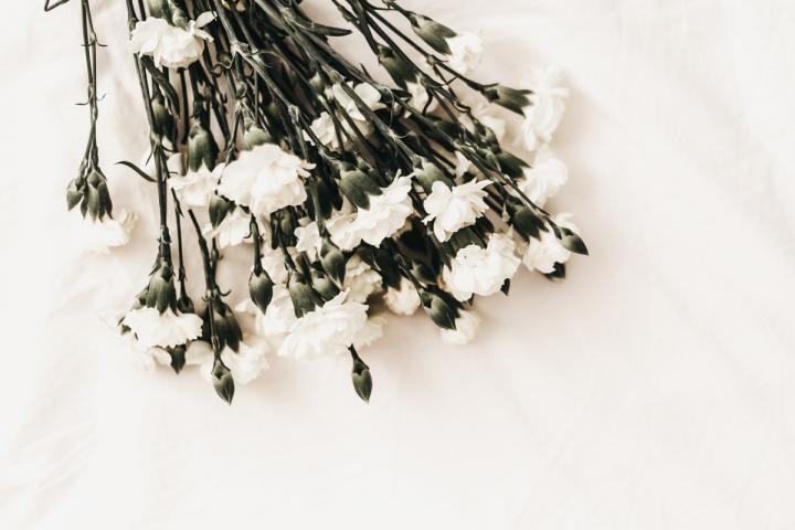 weiße Blumen als Symbol für den leisen Tod von Autoren