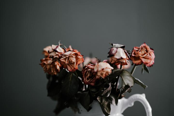 Verwelkte Blumen als Sinnbild für Aufgeben